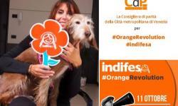giornata mondiale dei diritti delle bambine e delle ragazze - #OrangeRevolution