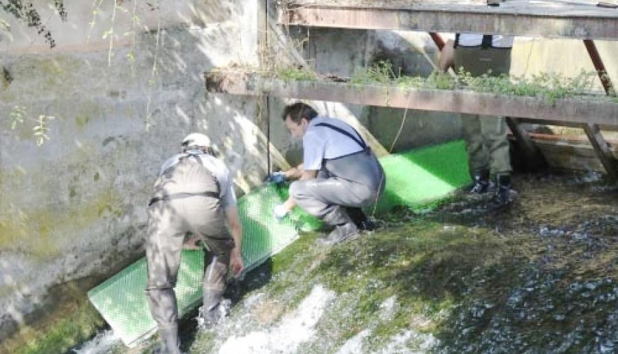 installazione della scala di risalita per anguille sul Lemene nel settembre 2011
